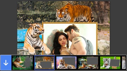 Tiger Photo Frame - Great and Fantastic Frames for your
