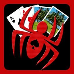 spidersolitaire++