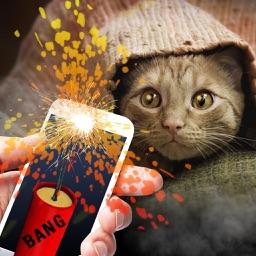 Bang Deafened Cat Prank