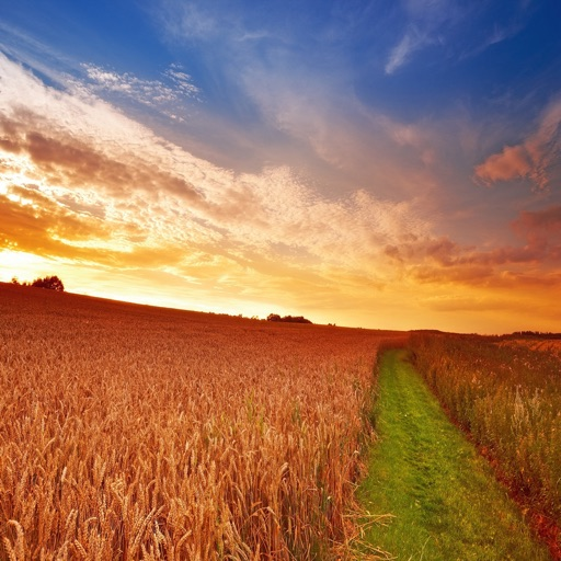 Countryside Wheat Field Wallpapers HD: Quotes Backgrounds with Art Pictures