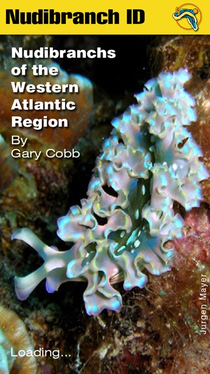 nudibranch id western atlantic by gary cobb