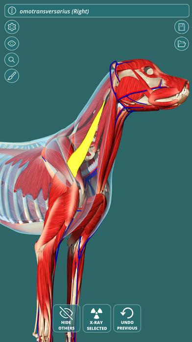 Visual Anatomy - Canine screenshot one
