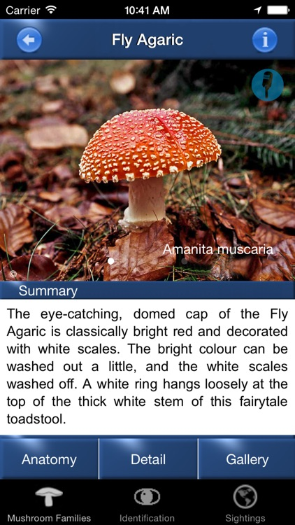 Mushroom Id North America - Fungi Identification Guide to Toadstools and Mushrooms screenshot-1