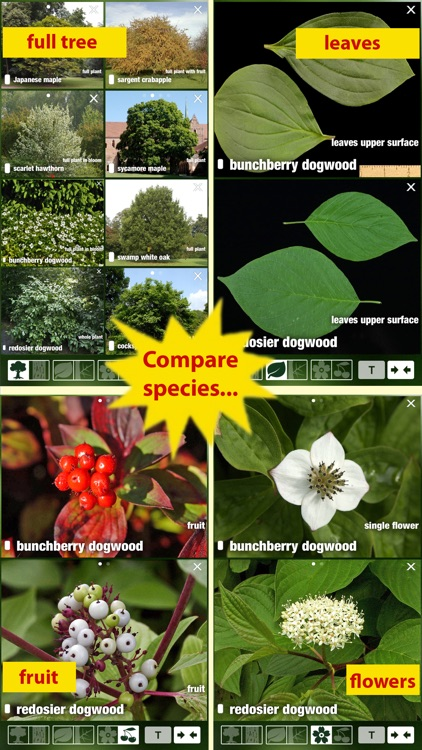 Tree Id Canada - identify over 1000 native Canadian species of Trees, Shrubs and Bushes screenshot-3