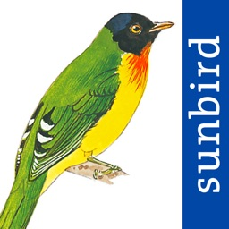 All Birds Venezuela - a complete field guide to identify all the bird species recorded in Venezuela