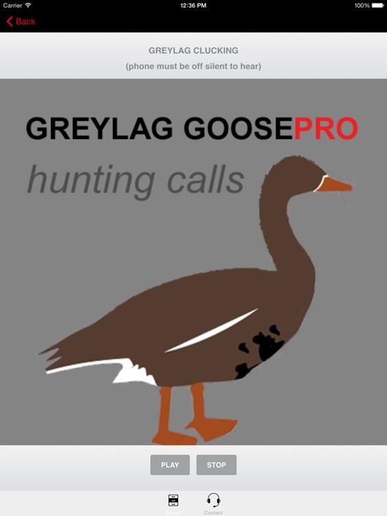 REAL Greylag Goose Hunting Calls -- Greylag Goose CALLS & Greylag Goose Sounds! (ad free) BLUETOOTH COMPATIBLE screenshot-0