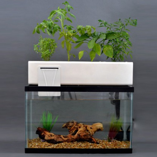 How to Make an Indoor Aquaponics System:Tips and Tutorial