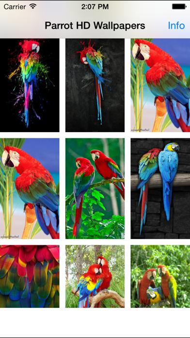 Parrot Wallpapers screenshot two