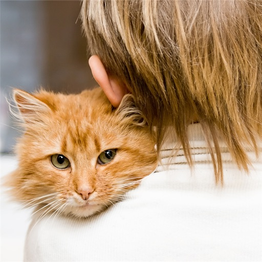 Health Benefits of Owning a Cat:Positive Effects and Guide