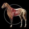 Horse Anatomy: Equine 3D