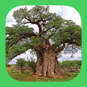 Etrees Of Southern Africa app review