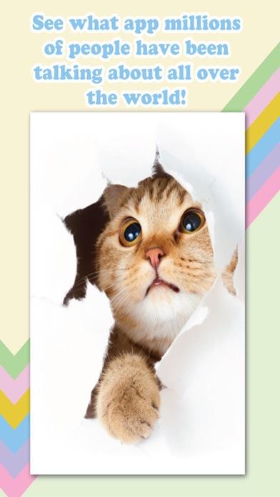 Cat Lover's Camera screenshot three