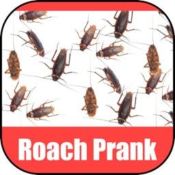 Roach Scare Prank