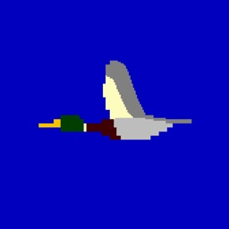 Duck Evasion
