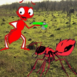 Ant Attack - Attack of the Fire Ants!