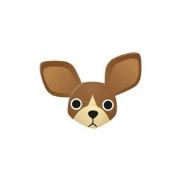 Kyoto Chihuahua