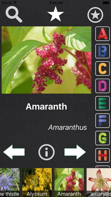 Flower Book - Information Of A - Z Flower Species