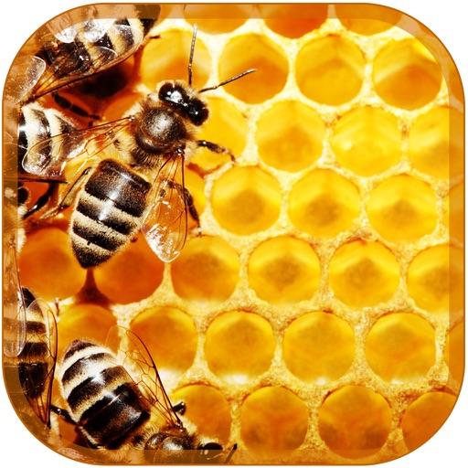 عسل درمانی - Honey Therapy