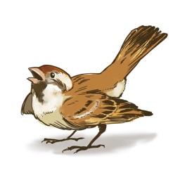 Sparrow Stickers