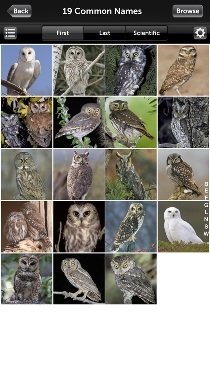 Audubon Owls Guide