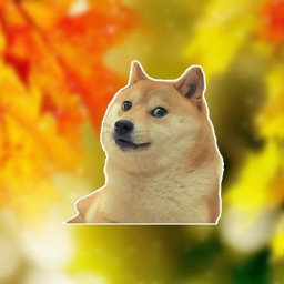 Doge Memes Faces - stickers meme pack for iMessage