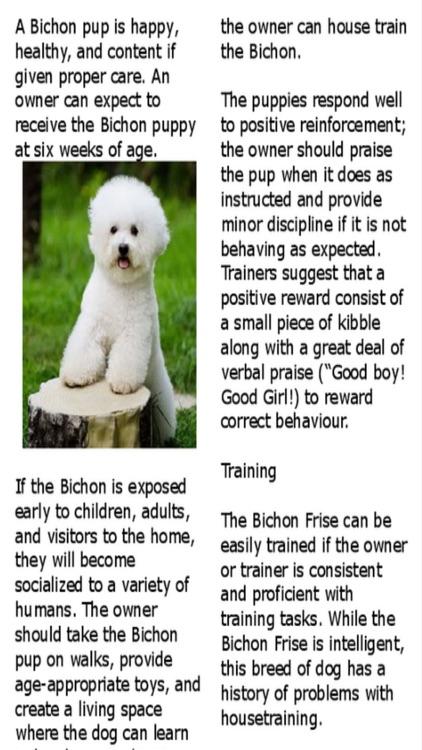 Bichon Boutique:Bichon Frise Magazine screenshot-3