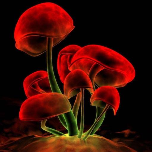 Herbarium HD