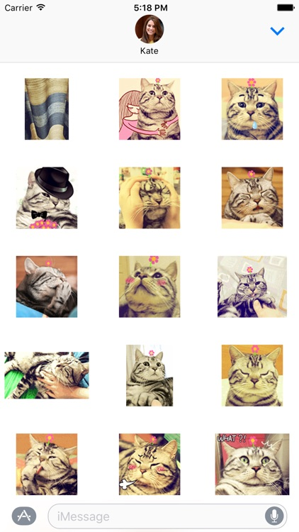 Lazy Cat Sticker