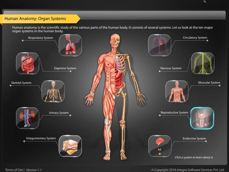 Human Anatomy Explorer - Reproductive System