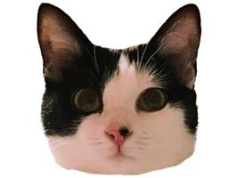 Muffin the cat
