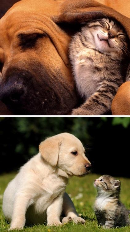 Cats & Dogs Wallpapers HD - Cute Puppies & Kittens screenshot-4