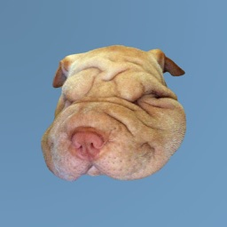 Sharpei Puppy Stickers