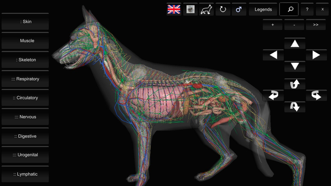 3d Canine Anatomy Online Game Hack And Cheat Gehackcom