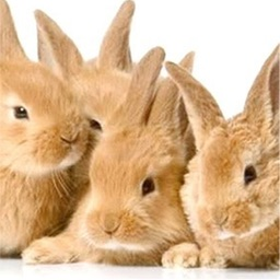 Fluffy Bunnies Jigsaw Puzzle HD
