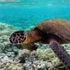 Underwater Species Wallpapers - Ocean World Images Ranking
