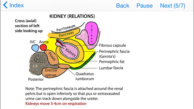 Easy Ways to Remember Tricky Areas of Anatomy screenshot-3