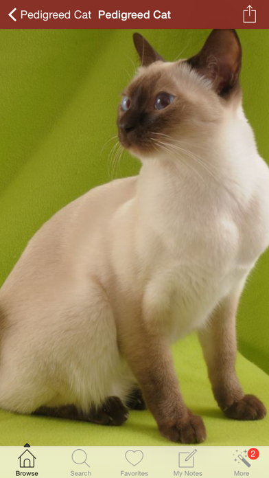 猫とペットのおすすめ画像1