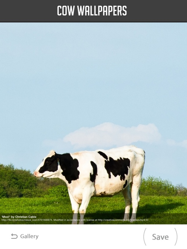 Cow Wallpapers On The App Store