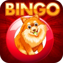 Bingo Of Doge - Free Doge Bingo For Fun