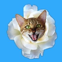 Kitty Bouquet