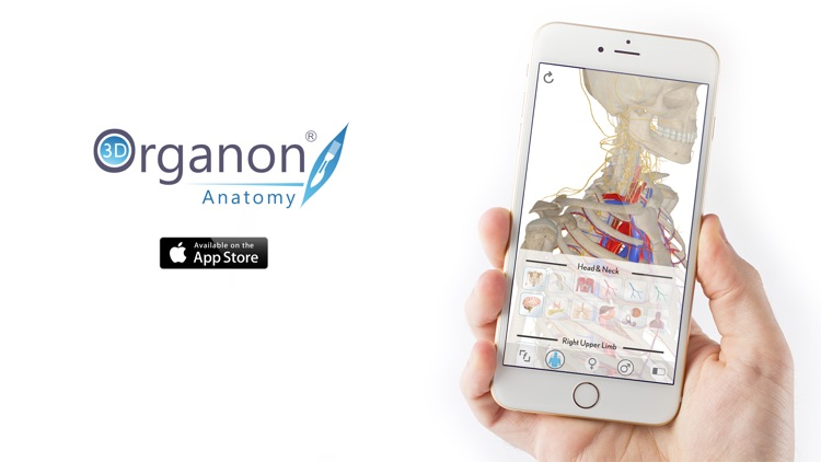 3D Organon Anatomy - Skeleton, Bones, and Ligaments screenshot-3