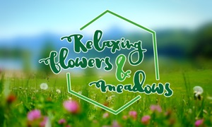 Relaxing Flowers & Meadows - Ambient Nature Wellness Yoga Video Wallpaper