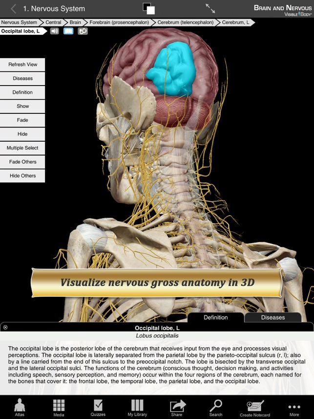Brain and Nervous Anatomy Atlas: Essential Reference for Students ...