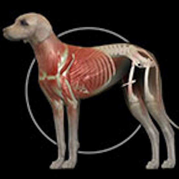 Horse Anatomy Equine 3d On The App Store