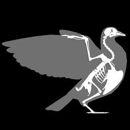 3D Bird Anatomy