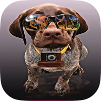 Codes for Dogs Quiz - Guess The Hidden Object that What's Breeds of Dog? Hack