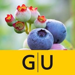 Wildkräuter & Beeren bestimmen – entdecken Sie heimische Kräuter und Beeren in Natur und Garten