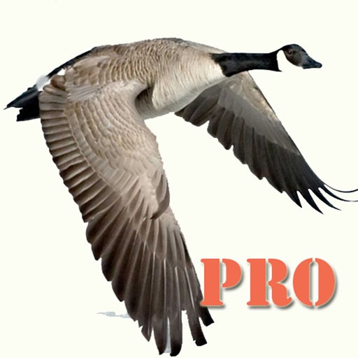 Goose Hunting Pro