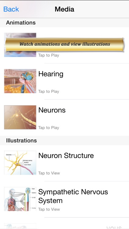 Brain and Nervous Anatomy Atlas: Essential Reference for Students and Healthcare Professionals screenshot-3