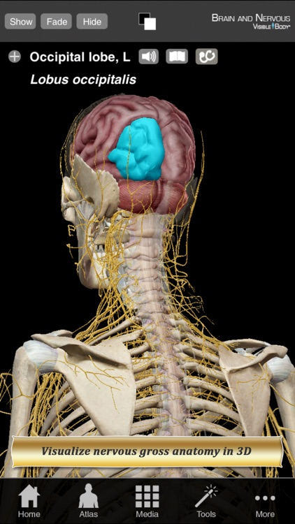 Brain and Nervous Anatomy Atlas: Essential Reference for Students and Healthcare Professionals screenshot-0